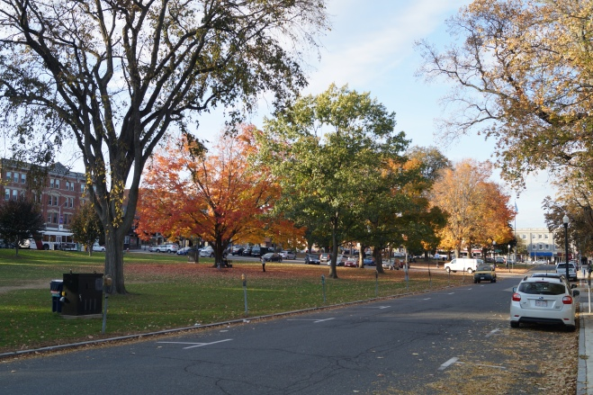 Amherst Common